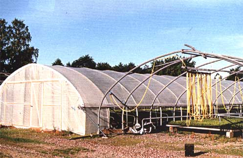 Bågväxthus plast
